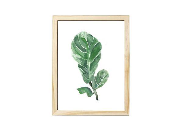 Cuadro Ficus Lyrata. Precio $931
