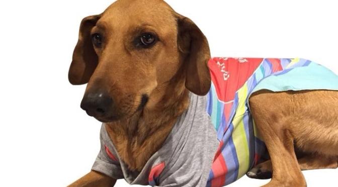 Simones invita a festejar la Semana del Animal con sorpresas para las mascotas en todas sus tiendas de CABA y GBA