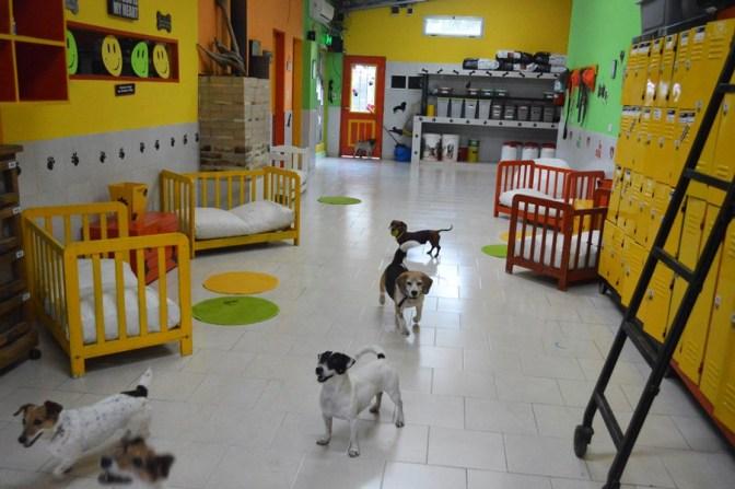 Por primera vez en el mundo, Booking.com permite reservar en su plataforma un hotel para perros