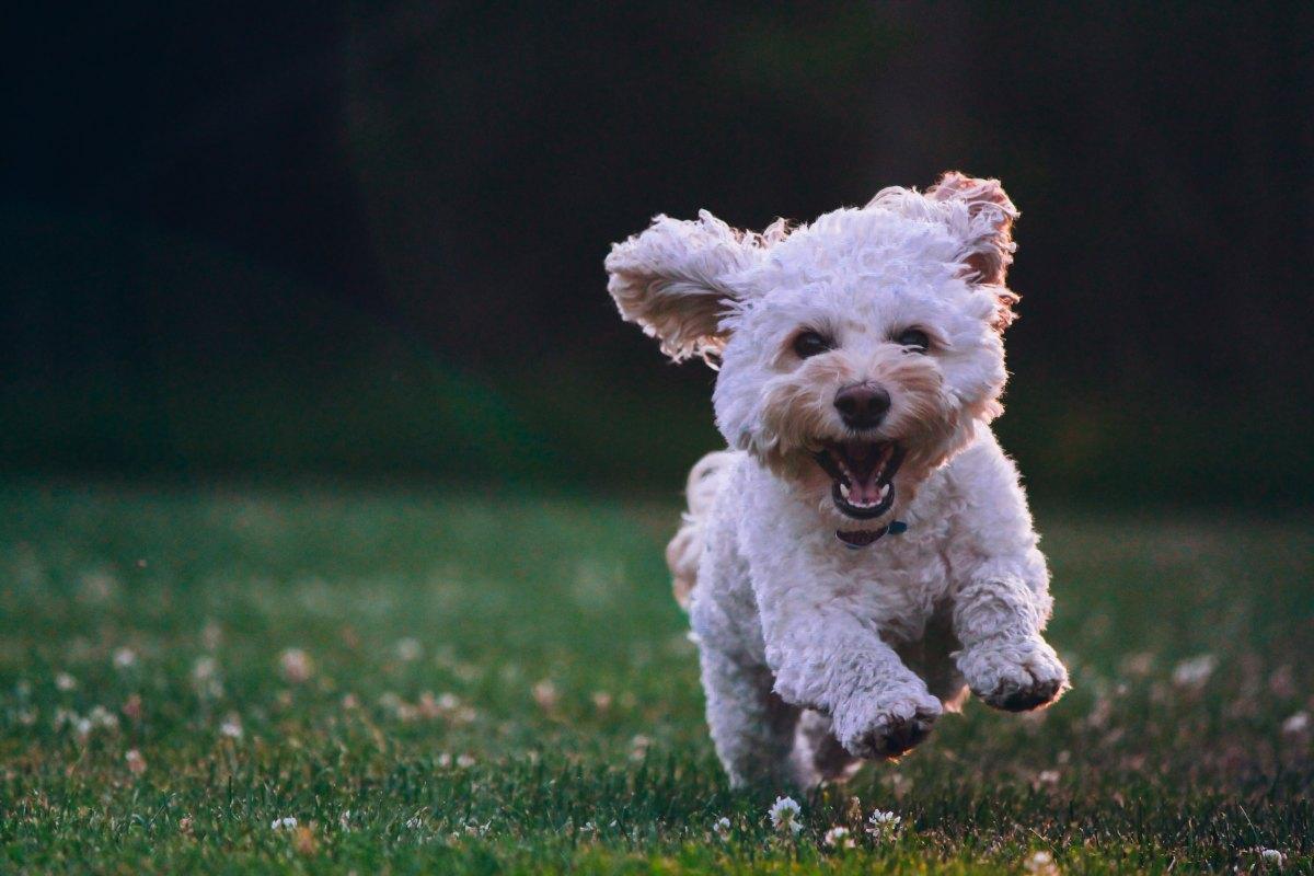 Claves importantes para cuidar a tu mascota y que sea feliz